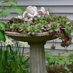 Small cherub statue in a birdbath