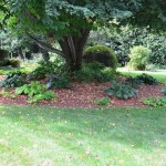 Marc and Tina's Linden tree and hostas