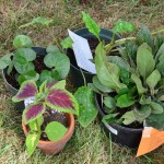 Some items from the fall plant swap