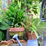 Some of the many potted plants