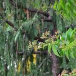 Tower Hill Botanic Garden