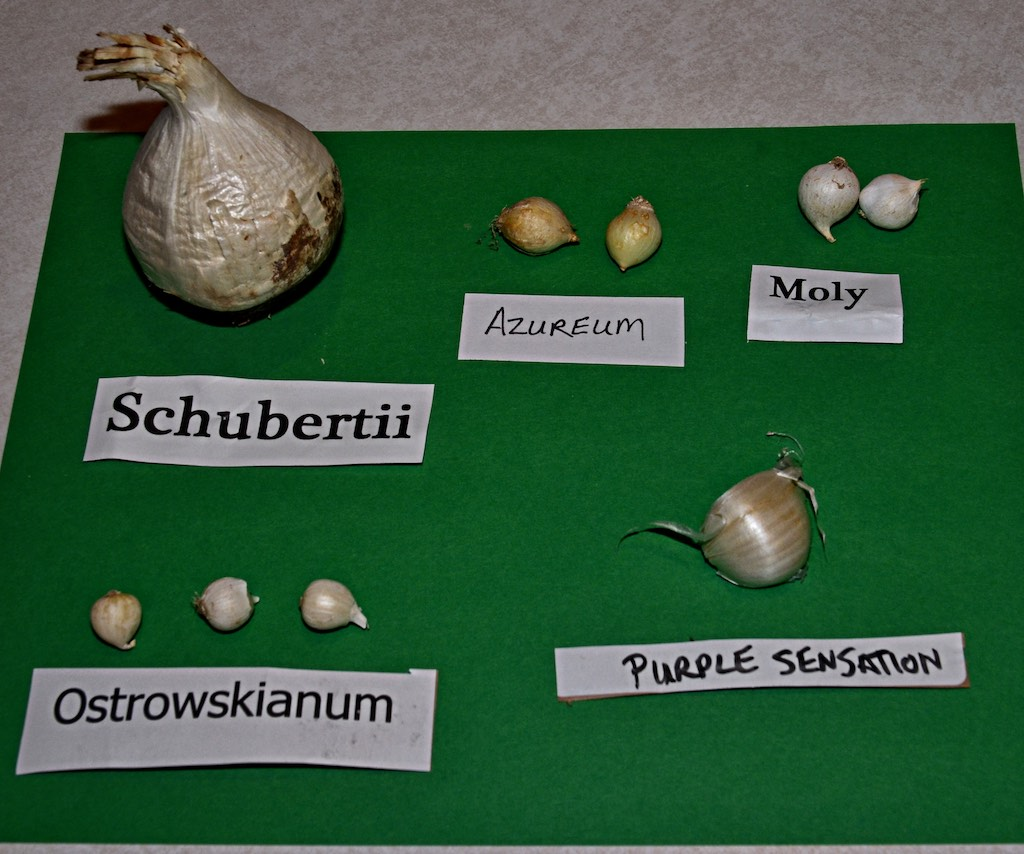 Image showing the bulbs.