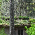 Natural Roof