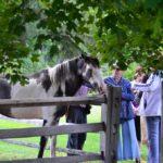 Brigham Hill Farm 2016