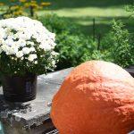 Orange Hubbard Squash